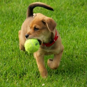 moneymagpie_dog-with-ball